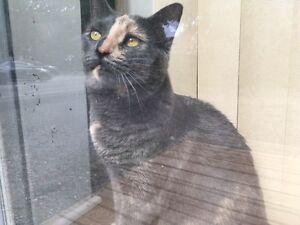 Missing female cat in St. Thomas! Cash reward. Please help!