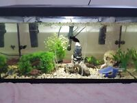 Fish Tank / Medium sized aquarium.