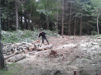 Tree removal, wood cutting & more