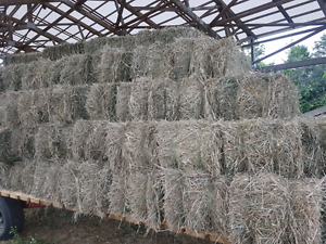 2nd cut hay - small square bales