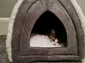 Female Kitten 3 months old