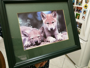 Two wolf pictures 16x13.
