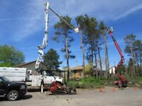 Tracked Tree Removal by Master Tree Care... Nobody Has Our Equip
