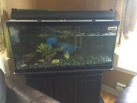 90 gal Aquarium for sale