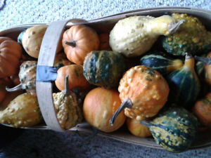 Gourd Giveaway - Small decorative gourds
