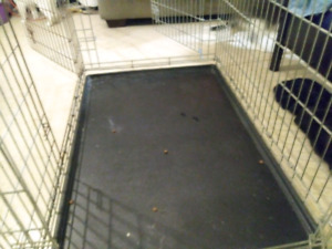 Three door dog kennel