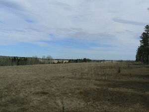 Productive 80 Acres (m/l), NW of Sundre