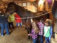 March Break Horse Day Camp