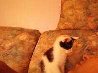 Beautiful Kitten to a good home.