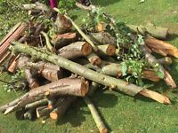 WOOD LOGS FROM PLUM TREE