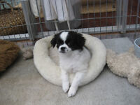PUPPY FOR SALE - ONLY ONE LEFT!