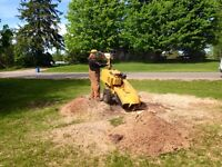 Stump Grinding / Stump Removal