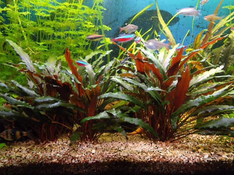 Top 10 Aquarium Plants | eBay