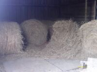 Free old round bales of hay