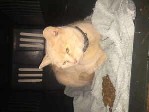 orange cat found by warmer road, Saskatoon
