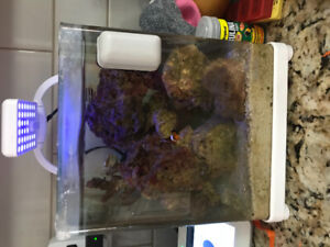 Desk top mini salt water aquarium including live rock and Nemo!