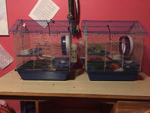 2 Hamsters plus all amenities for sale!