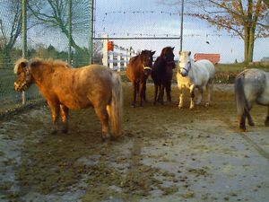 This Weekend...Miniature Horse and Tack Sale