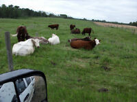 Pasture For Rent