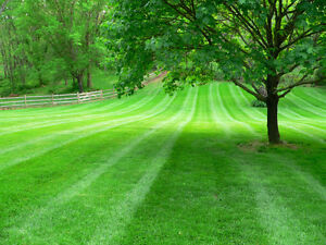 Professional lawn cutting. Small lots to several acres Cambridge Kitchener Area image 5