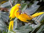 sharisbirds