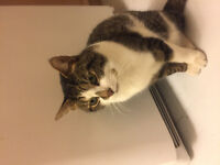 Male cat found June 6 in the Millbank/Southdale area