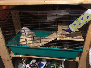 2 Hamsters (3 Cages and Accessories)