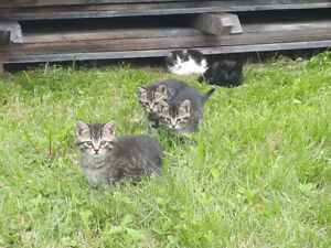 3 month old kittens