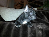 Adorable Black French Bulldogs Male and Female CKC Registered