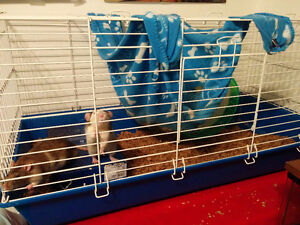 PET RATS & CAGE TO GOOD HOME
