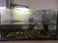Turtles and full tank setup!