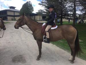 ISO SCHOOL HORSES