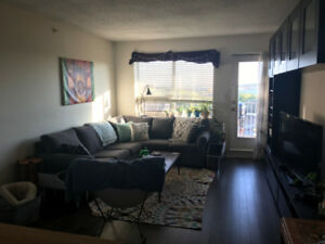 Looking for roommate in 2 bed apartment (Clayton Park)