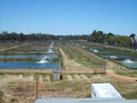 Australian Fish and Crustacean Farm