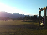 Looking for house or farm for rent in Valemount area