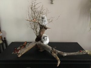 CUSTOM MADE OWL DRIFTWOOD DISPLAYS