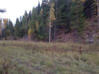 Almost five beautiful private acres outside Fernie BC