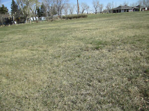 6 LOTS IN CARMANGAY, AB. FOR SALE
