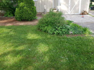 Lawn care and clean up