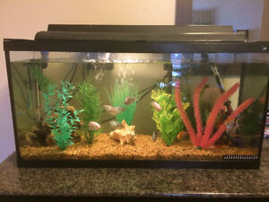 Selling 40 Gallon Tank!!! GREAT DEAL!