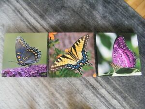 Set of three Butterfly Canvas Pictures--New