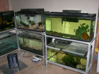 Two Sets of 33 Gallon Fish Tanks on Stands $ 200 Each Set