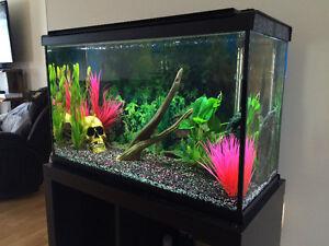 Aquarium 30 gallons tout équipé avec accessoires