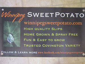Plants for sale. Grow your own sweet potatoes!