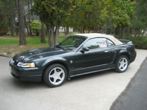 Mustang Convertible - JUST REDUCED