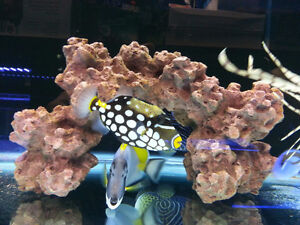 Saltwater Fish Live Rock Coral Tank