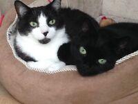 2 Beautiful Male Cats