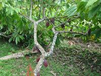 Plantation de Bois Tropicales  -- TERRES ET COMMERCE À VENDRE--