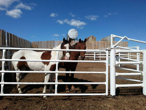 5 and 9 years old horses gelding (both experienced in feedlots)
