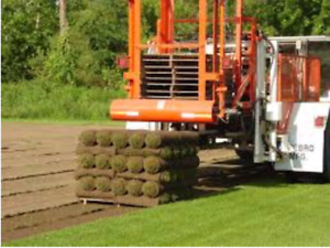 Free delivery kentucky blue grass skid rolls lawn farm direct